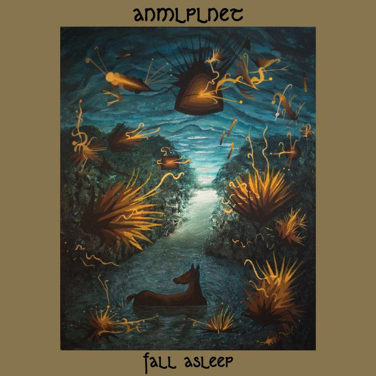 ANMLPLNET Fall Asleep