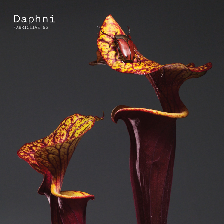 Daphni 'Hey Drum'