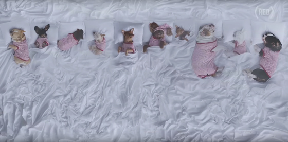"Watch These Cuddly Dogs Parody Kanye West's ""Famous"" Video"