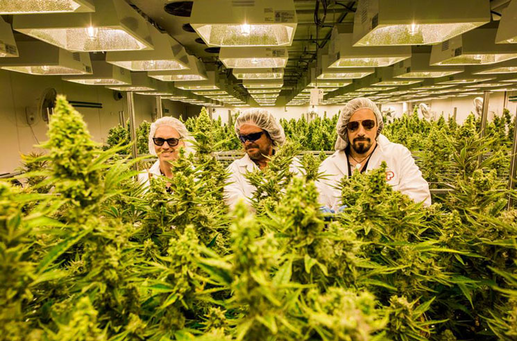 The Tragically Hip Set to Make Millions from Marijuana Merger