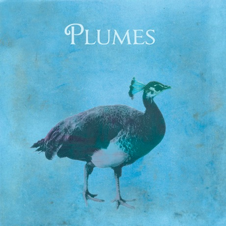 Former Flotilla Members Announce Debut LP as Plumes