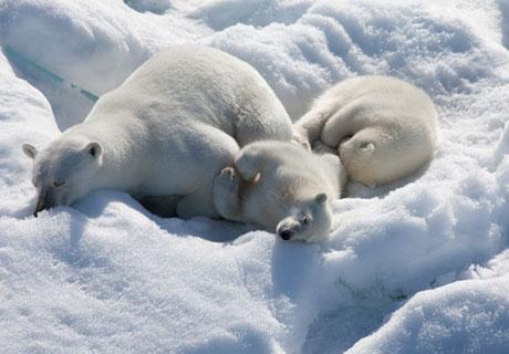 To The Arctic Greg MacGillivray