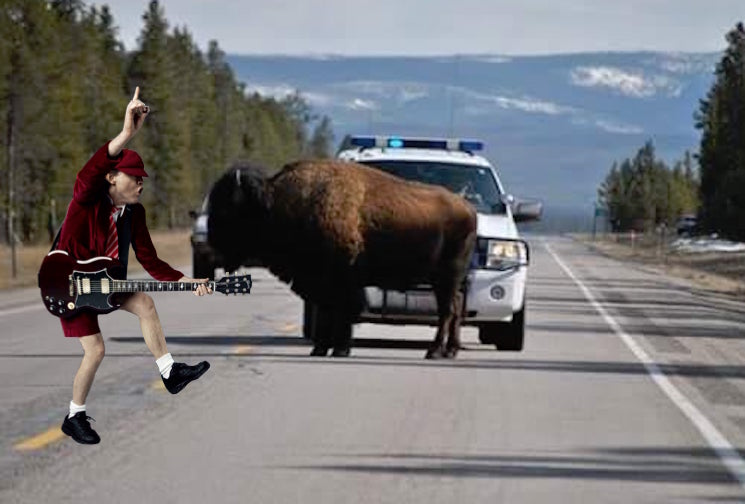 Montana Police Blast AC/DC's 'Hells Bells' to Scare Bison Off the Highway