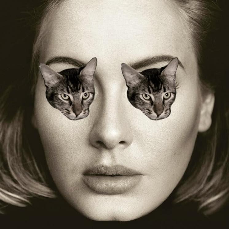 Adele Visits Vancouver's Cat Café