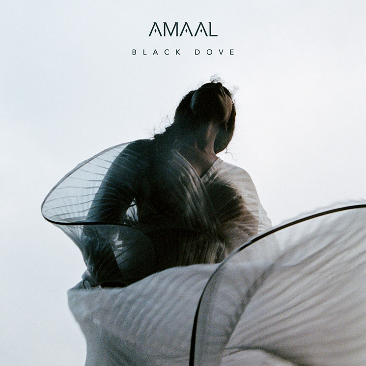 Amaal Black Dove