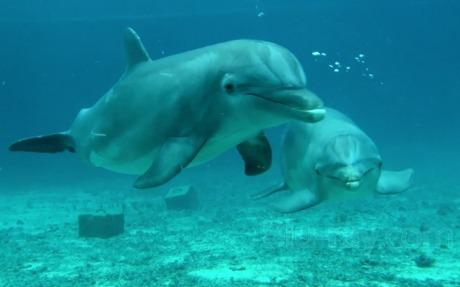 Amazing Ocean 3D [Blu-Ray] Benjamin Eicher & Timo Joh. Mayer