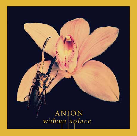 Anion Without Solace
