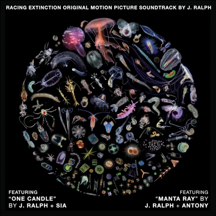 "Antony/Sia ""One Candle"" / ""Manta Ray"" (with J. Ralph)"