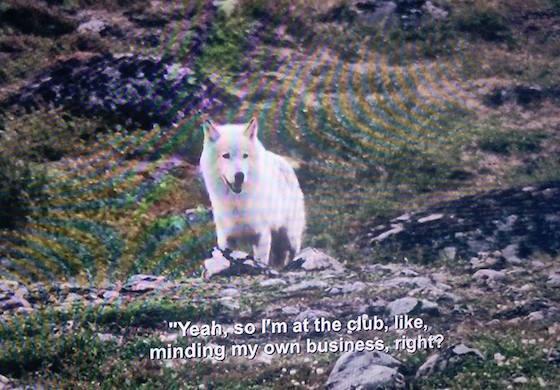 Aziz Ansari Narrates 'Planet Earth' in Netflix Subtitle Flub