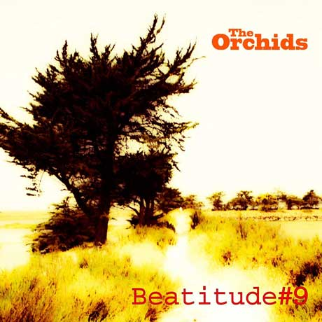 The Orchids Beatitude #9
