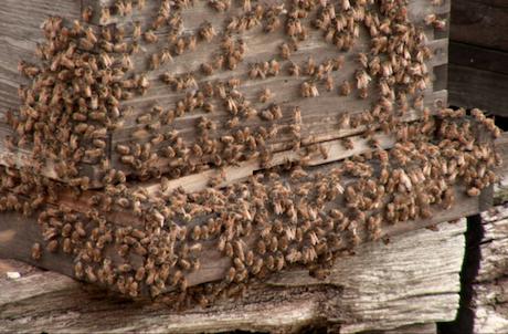 Me, the Bees and Cancer John Board, Jim Donovan & Hector Centeno