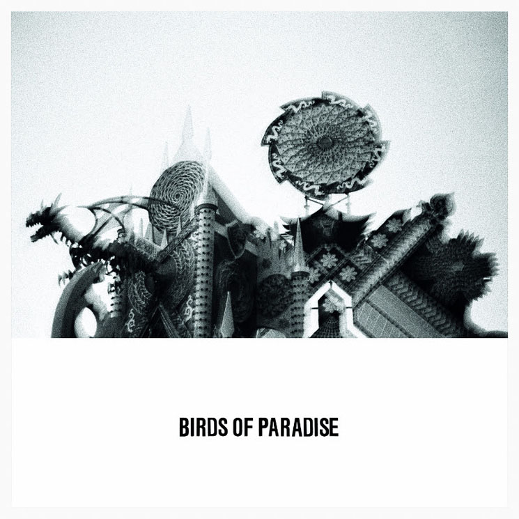 Birds of Paradise 'Love Is Confusion' (EP stream)