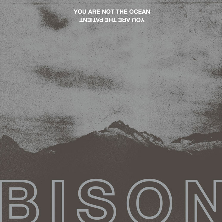 "Bison Return with New Album, Share ""Tantrum"""