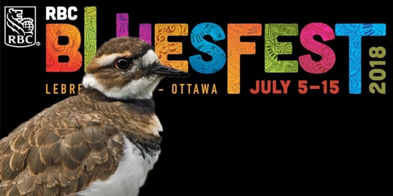 Bird causes delays in Bluesfest setup