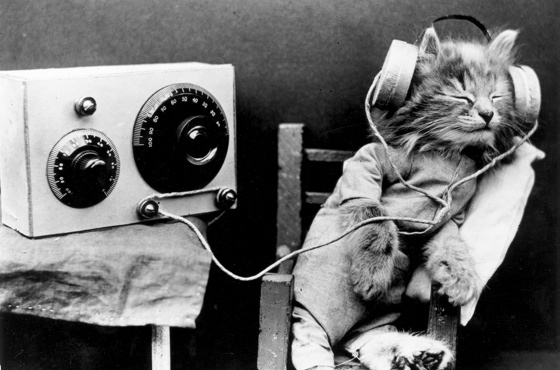 God Bless Science! Here's the Music Your Cat Likes