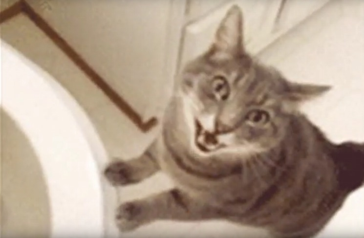 """Run the Jewels """"All Meow Life"""" (video)"""