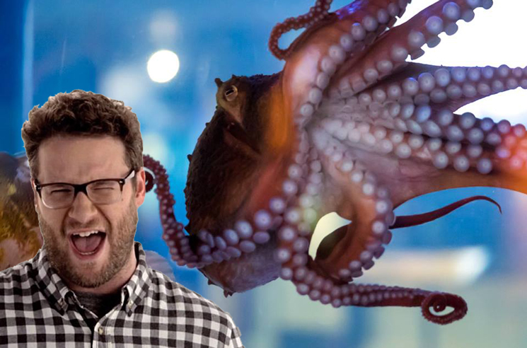 "The Vancouver Aquarium's New Octopus Is Being Named ""Ceph Rogen"""