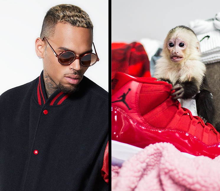 Chris Brown Could Go to Jail for Owning a Monkey