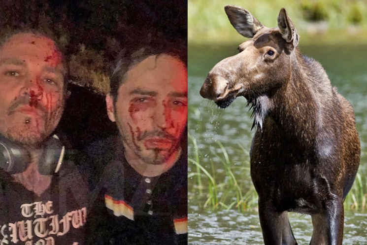 Crazy Town bandmates bloodied up after tour van smashes into moose