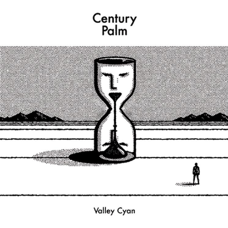Century Palm 'Valley Cyan'
