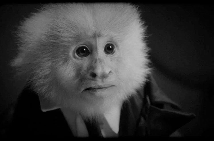 Watch David Lynch Interrogate a Monkey in His New Netflix Short Film