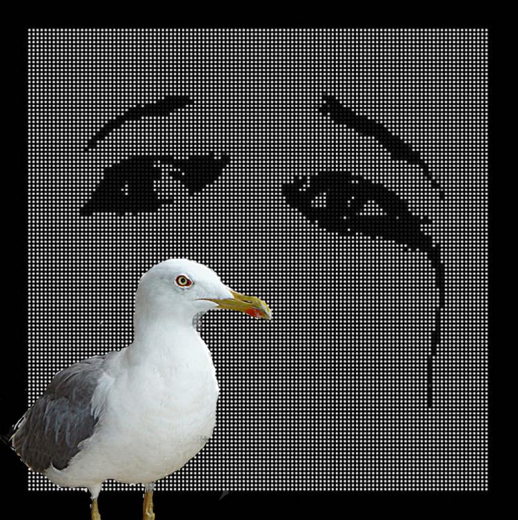 Deftones' New Album Has Actual Seagulls on It