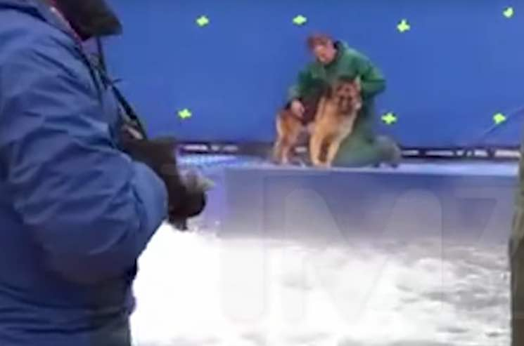 'A Dog's Purpose' Accused of Animal Abuse on Film Set