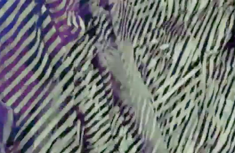 """Doldrums """"Copper Girl"""" (video)"""