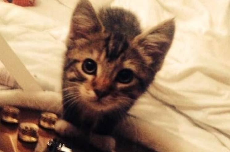R.I.P. Ed Sheeran's Kitten