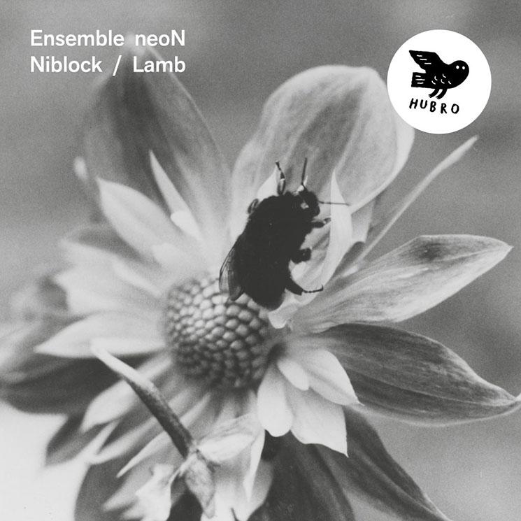 Ensemble neoN Niblock / Lamb