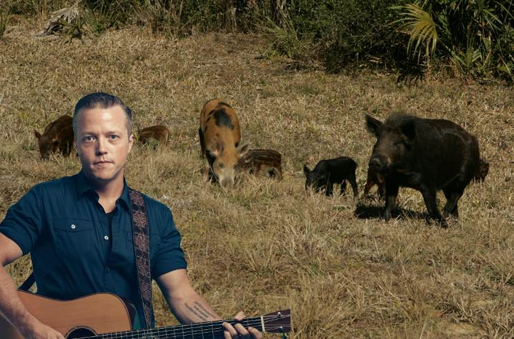 "​Jason Isbell Is to Blame for Those ""30 to 50 Feral Hogs"" Going Viral"