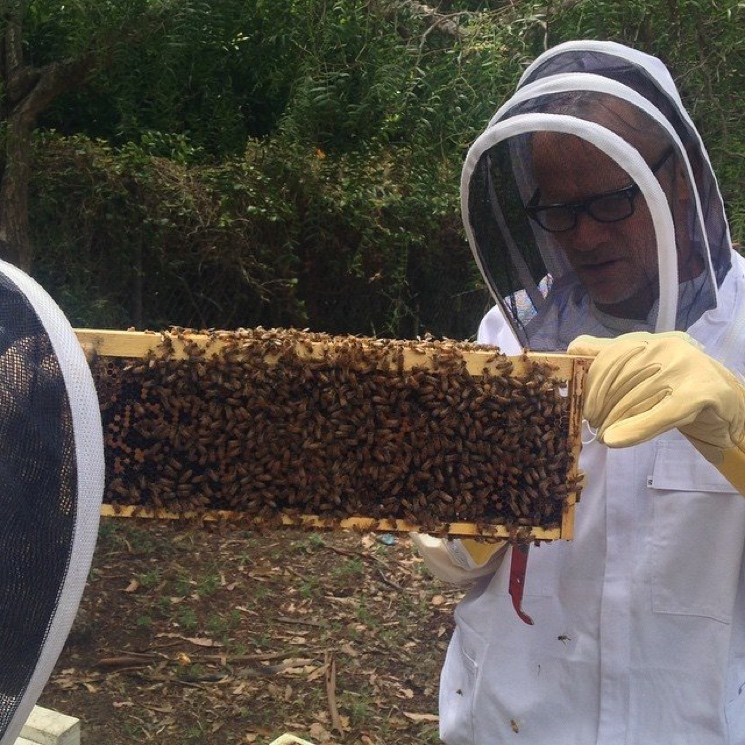 Flea Takes Up Beekeeping
