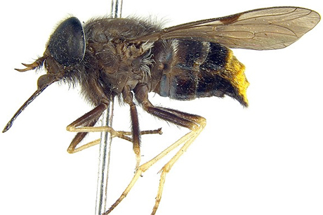 Scientists Name Species of Fly After Beyoncé