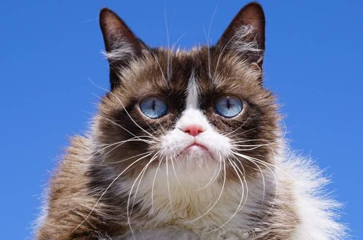 R.I.P. Grumpy Cat