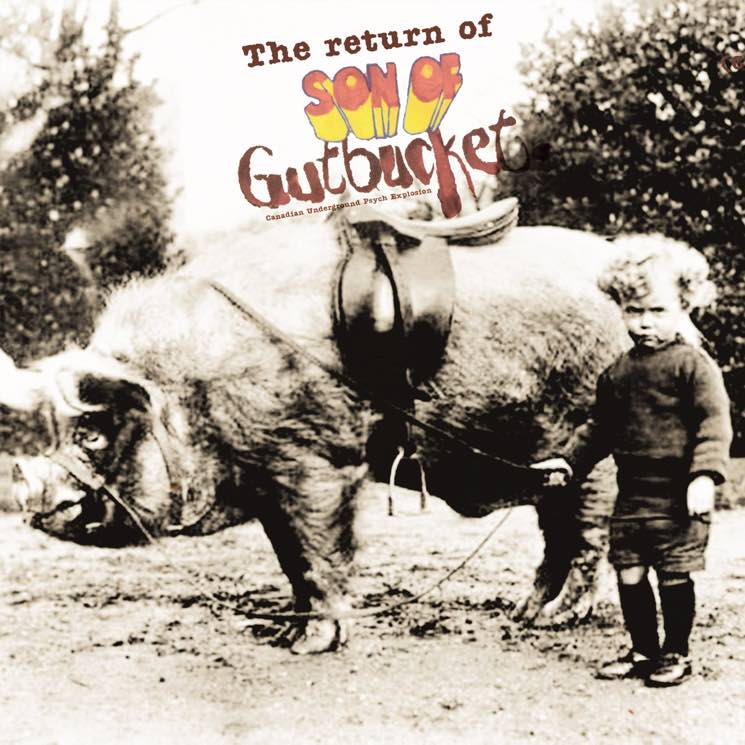 Various  Return of Son of Gutbucket - Canadian Underground Psych Explosion