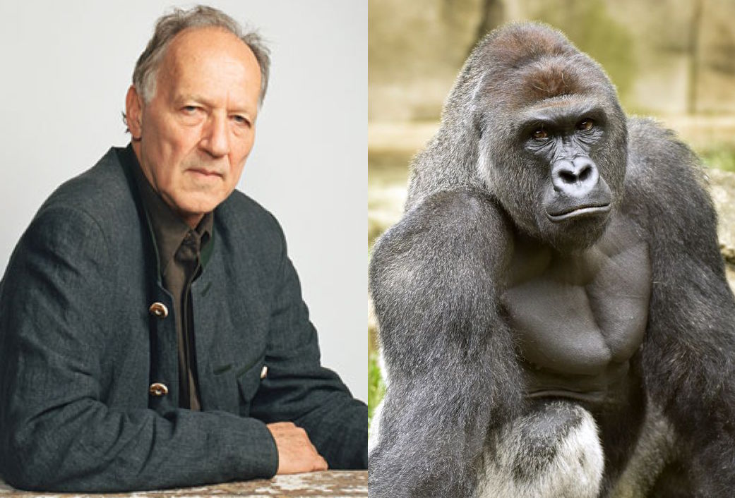 Werner Herzog Discusses Beloved Dead Ape Harambe