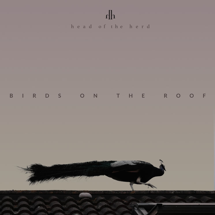 Head of the Herd 'Birds on the Roof' (album stream)