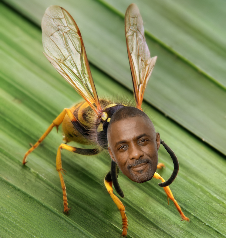 Idris Elba Has Inspired the Name of a New Species of Wasp