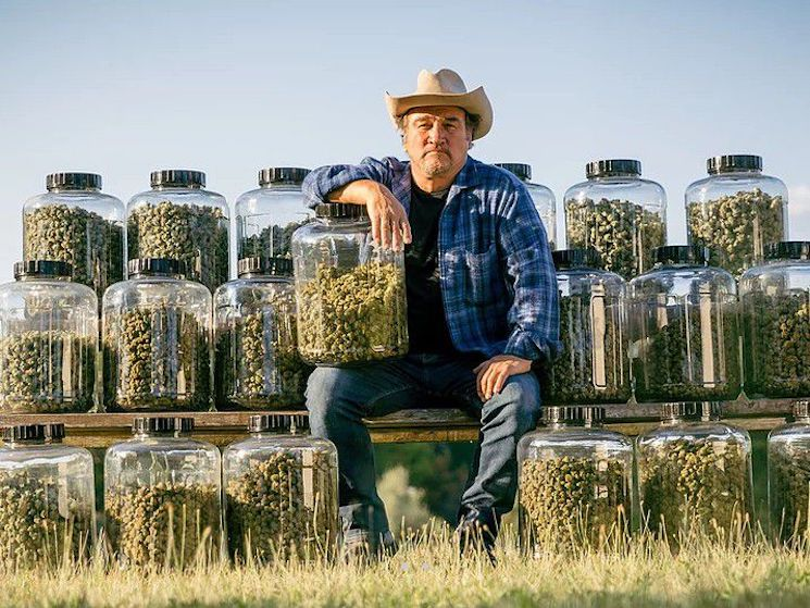Jim Belushi, Weed Farmer, Says 'If My Brother John Was a Pot Head He'd Still Be Here Today'