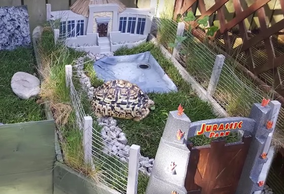 Hold On to Your Butts: This Guy Built a 'Jurassic Park' for His Pet Tortoise