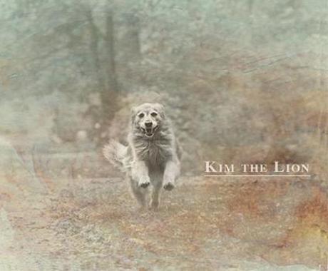 Kim The Lion Kim The Lion