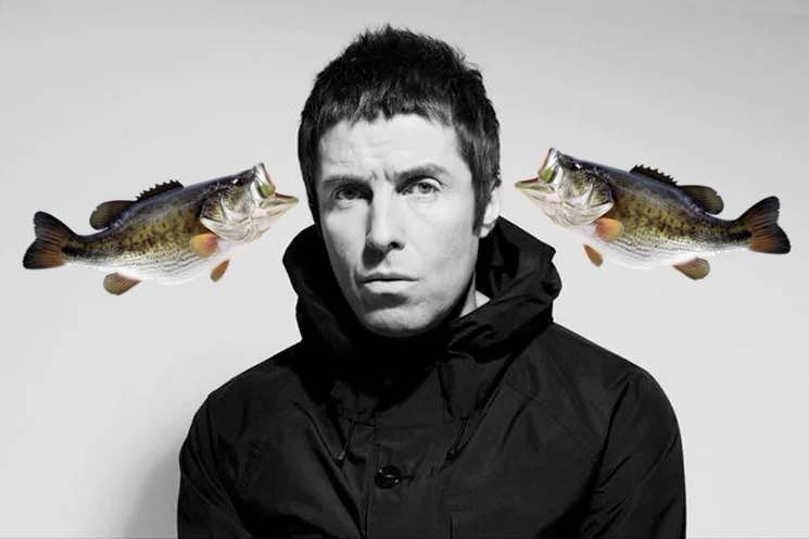 ​Someone Threw a Fish Onstage at Liam Gallagher at Benicassim Festival