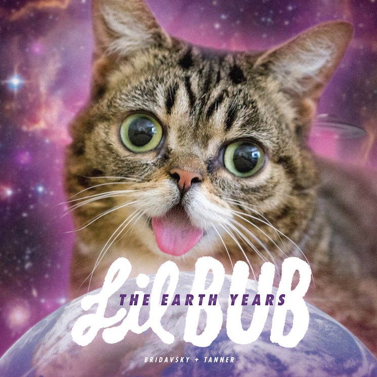 Late Internet Cat Lil BUB Gets Steve Albini, Andrew W.K., Kimya Dawson, El-P for New Book