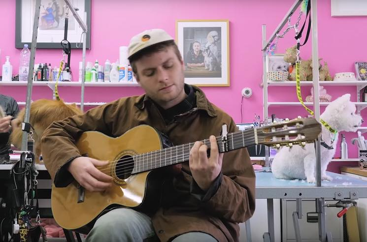 "Watch Mac DeMarco Play ""This Old Dog"" at a Dog-Grooming Parlour"