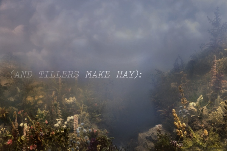 "Joanna Newsom ""Make Hay"" (lyric video)"