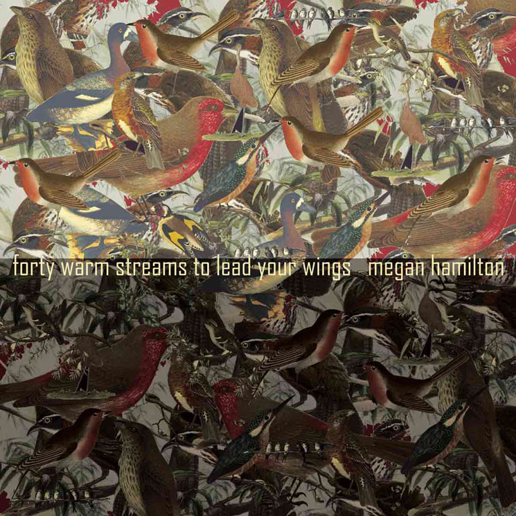 Megan Hamilton 'Forty Warm Streams to Lead Your Wings' (album stream)