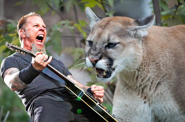 The Woman Who Shooed a Cougar with Metallica Thanked James Hetfield for Saving Her Life