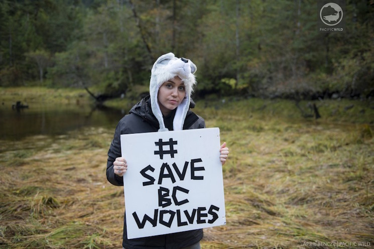 Miley Cyrus Invited Back to BC to Better Understand Wolf Cull