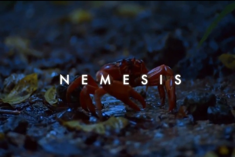 "Zoo Owl ""Nemesis"" (video)"