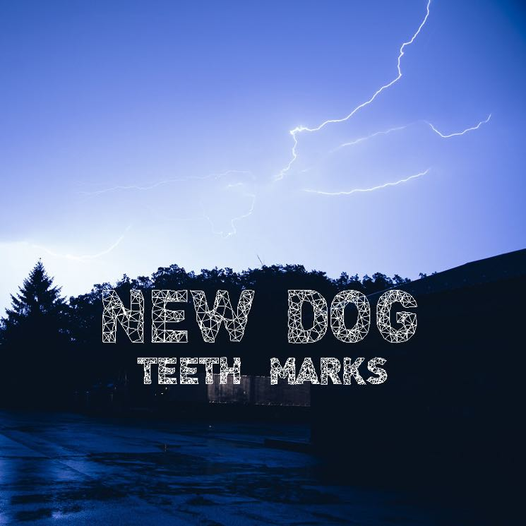 New Dog Teeth Marks